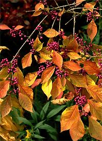 Pflanzen China